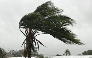 Hurricane winds blow a palm tree - Roofing Contractor in Essex - Old Line Roofing and Solar
